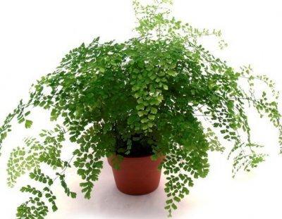Комнатные растения  Страница 3  DomFlorisru